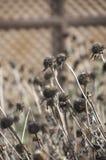 Hösten landskap fotografering för bildbyråer