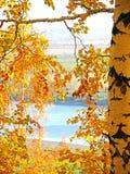 Hösten landskap Björk på en bakgrund av sjön Royaltyfri Fotografi
