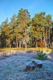 Hösten landskap. frost Arkivbild
