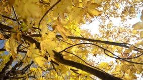 Hösten landskap Härliga färger av hösten i oktober Ljusa, för apelsin, gula och guld- sidor på solljus Fallande färgrik le arkivfilmer