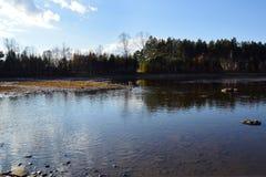 Hösten landskap Hundavellabrador som spelar i floden Arkivfoto