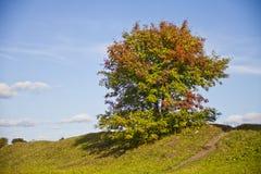 Hösten landskap isolerade den höga illustrationen 3d white för upplösningsrönntree Arkivfoton