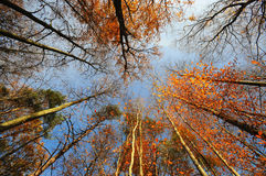 Hösten landskap med trees i skogen Royaltyfri Bild