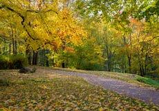 Hösten landskap Park i fall arkivbild