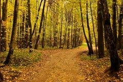 Hösten landskap Park i fallen Guld- höst Fotografering för Bildbyråer