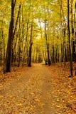 Hösten landskap Park i fallen Guld- höst Arkivfoton