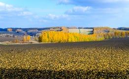 Hösten landskap Plogat fält på bakgrunden av höstskogen Arkivbild