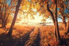 Hösten landskap Solig nedgångnatur Bana i skog arkivfoto