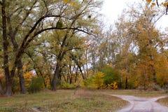 Hösten landskap vid liv groddar Fotografering för Bildbyråer