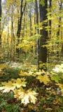Hösten målar av trät royaltyfria bilder