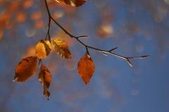 Hösten/nedgången lämnar Bokeh Arkivfoton