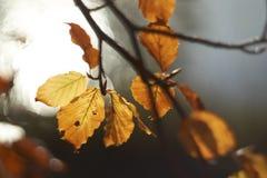 Hösten/nedgången lämnar Bokeh Royaltyfri Foto