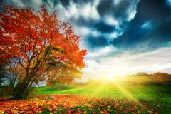 Hösten nedgånglandskap parkerar in Royaltyfria Foton