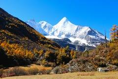 Hösten på den Yading naturreserven i det Daocheng länet, Kina Royaltyfri Fotografi