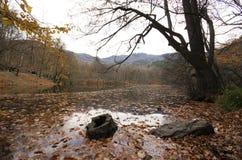 Hösten på Yedigoller parkerar sju naturliga sjöar på Bolu/Turkiet royaltyfria bilder