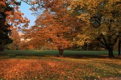 Hösten parkerar Fotografering för Bildbyråer