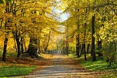 Hösten parkerar Arkivbild