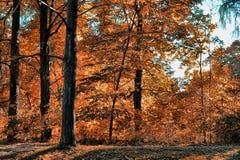 Hösten parkerar royaltyfria foton