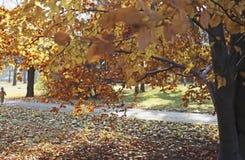 Hösten parkerar in royaltyfria foton