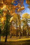 Hösten parkerar in Royaltyfri Fotografi