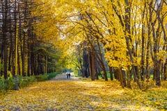 Hösten parkerar Arkivfoton
