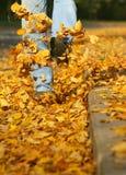 Hösten parkerar Royaltyfria Bilder