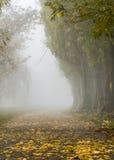 Hösten parkerar in Arkivfoto