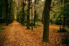 Hösten parkerar in Arkivfoton