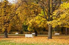 Hösten parkerar bänkar royaltyfria bilder