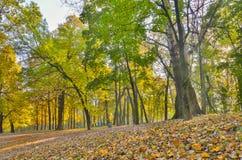 Hösten parkerar bakgrund Royaltyfria Bilder