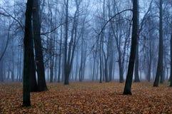 Hösten parkerar i dimman - höstlandskap royaltyfri fotografi