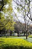 Hösten parkerar i morgonen i molnigt väder Bildhösten parkerar September landskap i parkerar Mulet väder Parkera gränder royaltyfri fotografi