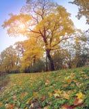 Hösten parkerar i solig dag Fotografering för Bildbyråer
