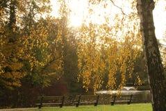 Hösten parkerar i solig dag Arkivfoton