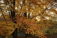 Hösten parkerar i solig dag arkivbilder