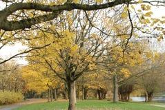Hösten parkerar i solig dag arkivfoto