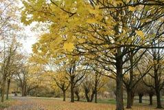 Hösten parkerar i solig dag royaltyfria bilder