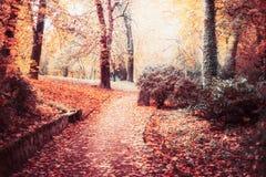 Hösten parkerar landskap med banan, träd, härlig lövverk och solsken, utomhus- nedgångnatur fotografering för bildbyråer