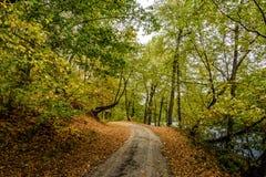 Hösten parkerar 2008 leaves för leaf för dunge för torr fall för lufthöst guld- nära oaken oktober russia vänder som spolar yello Fotografering för Bildbyråer