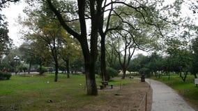 Hösten parkerar med bambuträd lager videofilmer