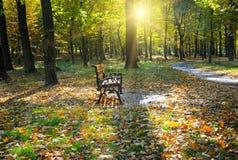 Hösten parkerar med banor och bänkar royaltyfria bilder