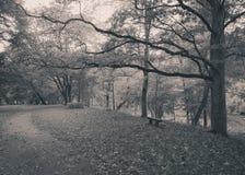 Hösten parkerar med en ensam bänk och en tom bana royaltyfri foto