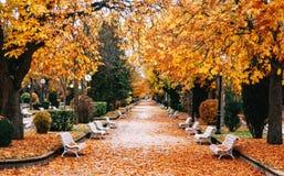 Hösten parkerar med guld- träd royaltyfria bilder