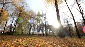 Hösten parkerar med lövverk arkivfilmer