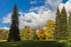 Hösten parkerar med olika träd Arkivbild