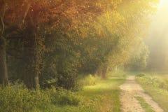 Hösten parkerar mot bakgrund field blåa oklarheter för grön vitt wispy natursky för gräs royaltyfri foto