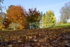 Hösten parkerar och bruna sidor arkivfoto
