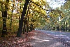 Hösten parkerar reserven för leken för den HvÄ› zdaen (den Obora HvÄ› zdaen), Prague royaltyfri fotografi