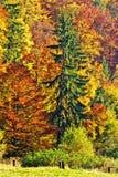 hösten räknade fallna skogjordningsligganden låter vara yellow Arkivbilder