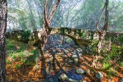 hösten räknade fallna skogjordningsligganden låter vara yellow Royaltyfri Fotografi